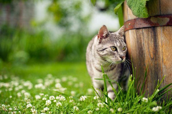 ガーデニングで虫除け、雑草除け対策になる(野良猫除け)
