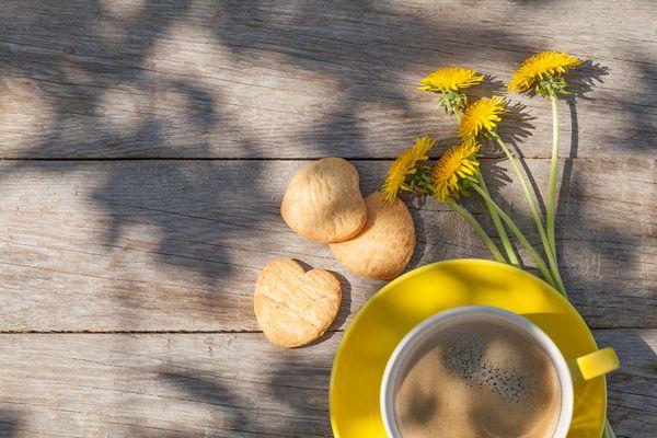 森下薬農園のたんぽぽコーヒーの成分とは